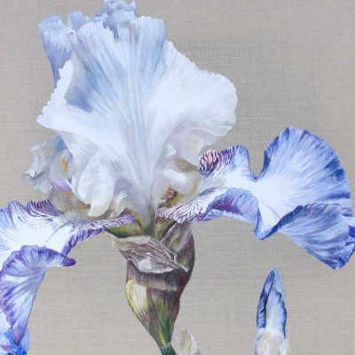 China White Dancer, original flower painting of bearded irises by Sarah Caswell