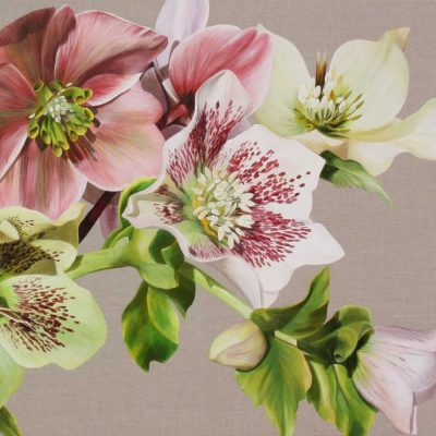 Helebore Melody Greetings Card by Sarah Caswell