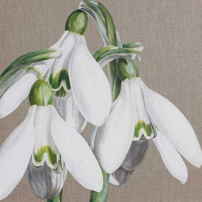 White and green snowdrops galanthus on linen background painting by UK floral artist Sarah Caswell