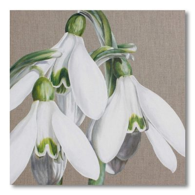 White and green snowdrop galanthus on linen painting by Sarah Caswell