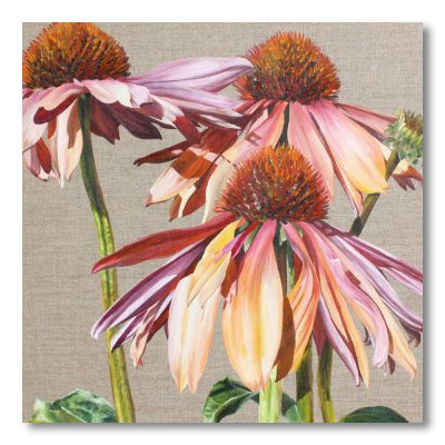 Multicoloured echinacea Sundowner on linen background painting by Sarah Caswell