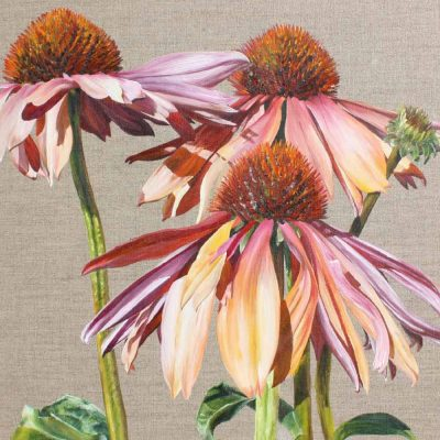 Multi-coloured echinacea Sundowner on linen background painting by UK floral artist Sarah Caswell