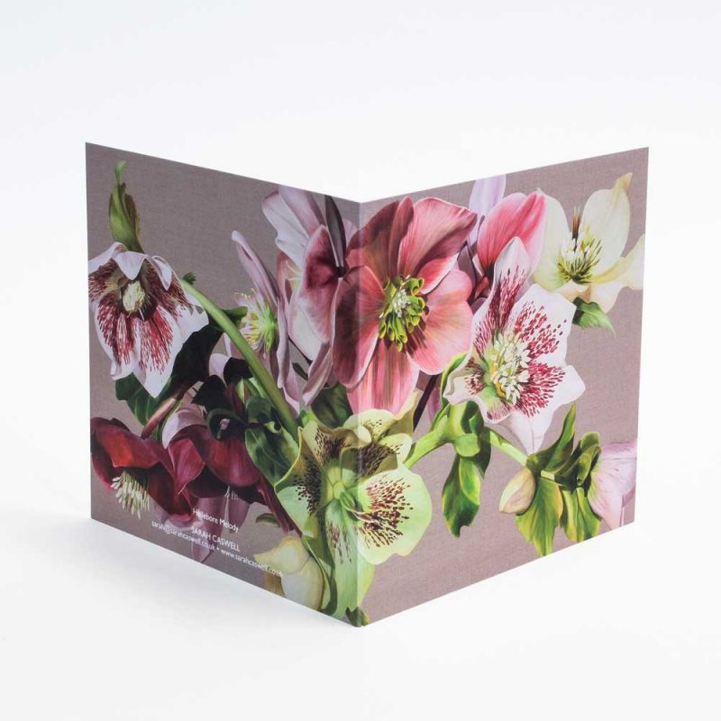 Pink and green and spotted hellebores on linen background painting by Sarah Caswell open card
