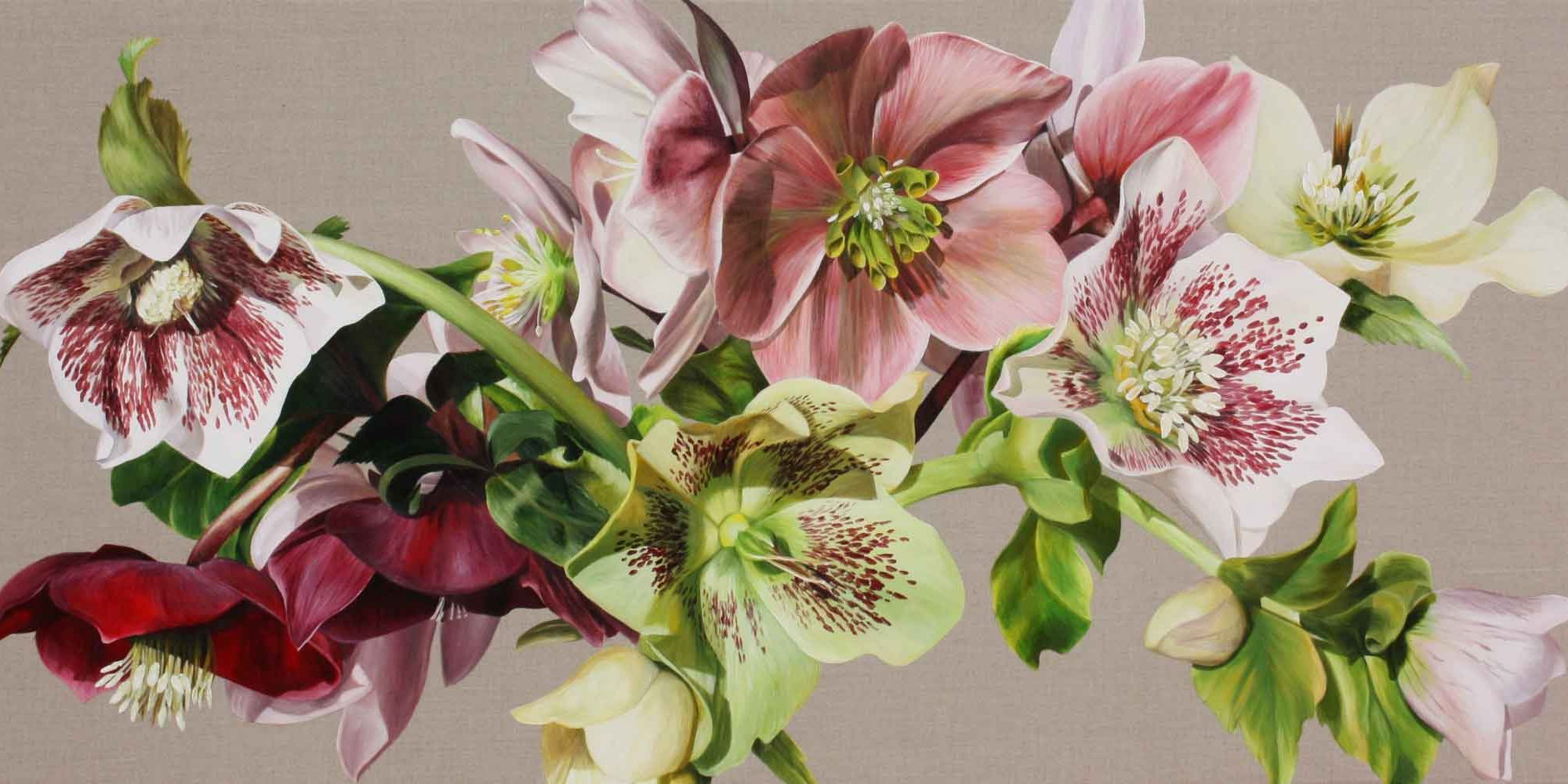 Pink and white and green hellebores on linen background. Painting by UK floral artist Sarah Caswell