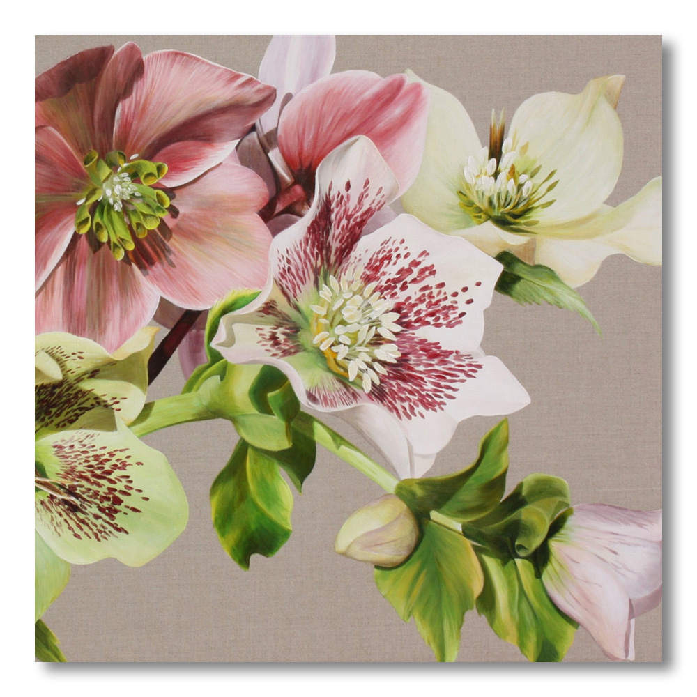 Pink and green and spotted hellebores on linen background painting by Sarah Caswell