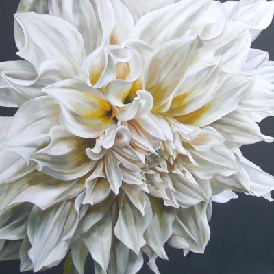White Cafe au Lait dahlia on black background painting by UK floral artist Sarah Caswell