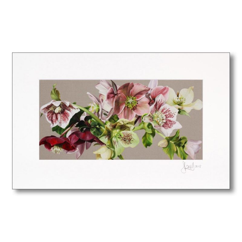 Green and white and pink hellebores on linen. Paper print in a signed mount. Painting in acrylic on linen by UK floral artist Sarah Caswell