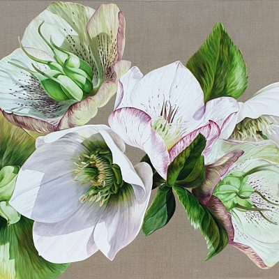 Original acrylic painting 'Hellebore Fresh' by Sarah Caswell.