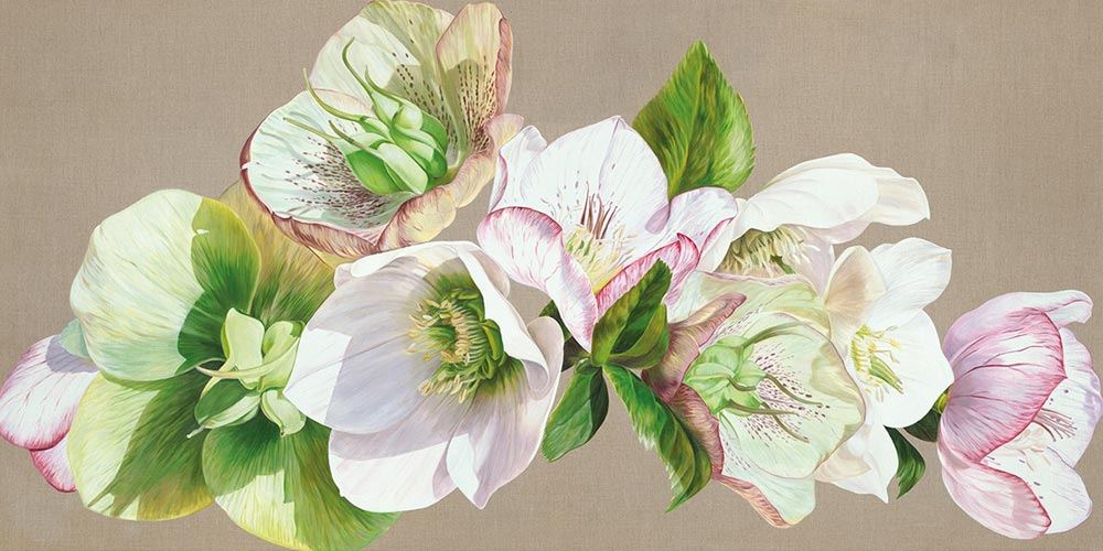 Canvas print of Original acrylic painting 'Hellebore Fresh' by Sarah Caswell