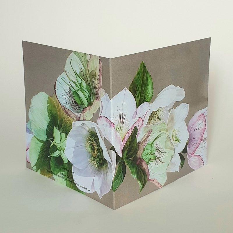Greetings card of the original acrylic painting 'Hellebore Fresh' by Sarah Caswell.