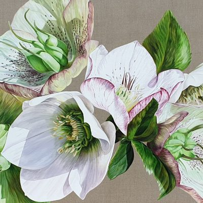 Mounted print of original acrylic painting 'Hellebore Fresh' by Sarah Caswell.
