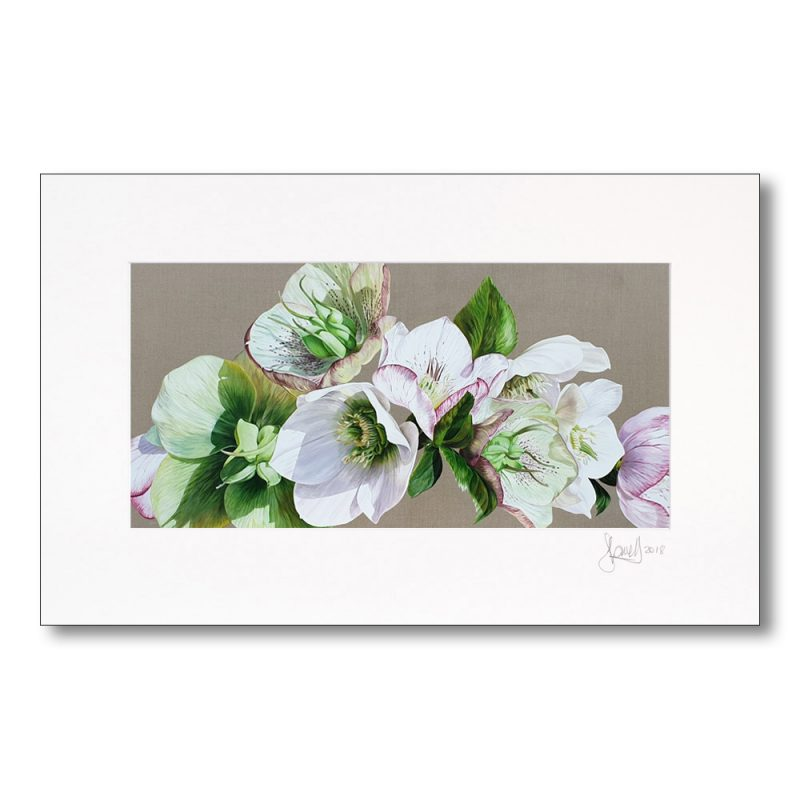 Mounted print of original acrylic painting 'Hellebore Fresh' by Sarah Caswell. Depicted with mount.