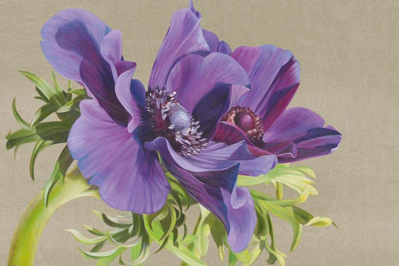 Rich purple anemones with green leaves in bright sunshine on a linen background