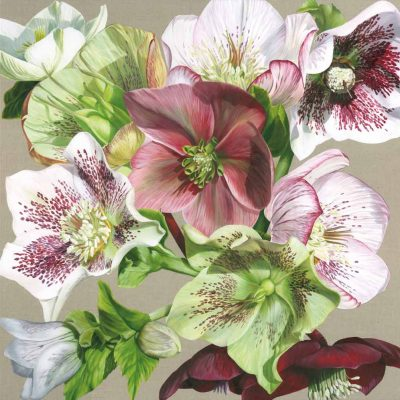 Original acrylic painting on linen canvas, A collection of hellebores from white, pink veined, through green to darkest claret. In bright sunshine. This painting was created specifically to be the model for the second Sarah Caswell silk scarf 'No.2'.