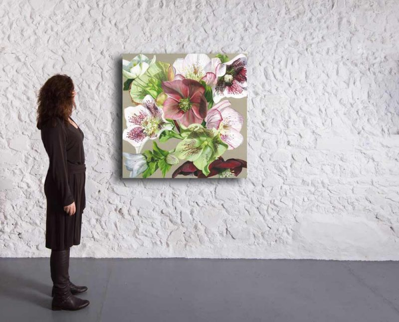 Original acrylic painting on linen canvas by Sarah Caswell, A collection of hellebores from white, pink veined, through green to darkest claret. In bright sunshine, depicted in a gallery setting.