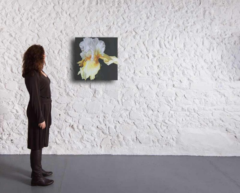 Original acrylic painting on cotton canvas by Sarah Caswell, Lemon yellow and white bearded iris in bright sunshine on cast iron painted ground.