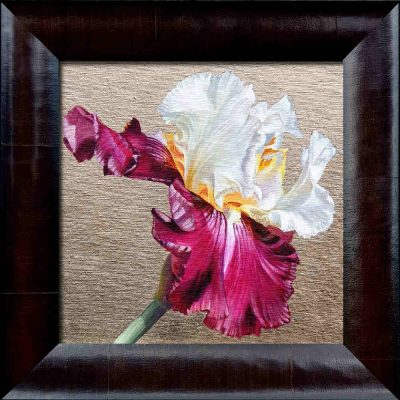 White and pink bi-coloured bearded iris in bright sunshine on 22.5ct moon gold leaf background. Original acrylic painting by UK Floral Artist Sarah Caswell on canvas.