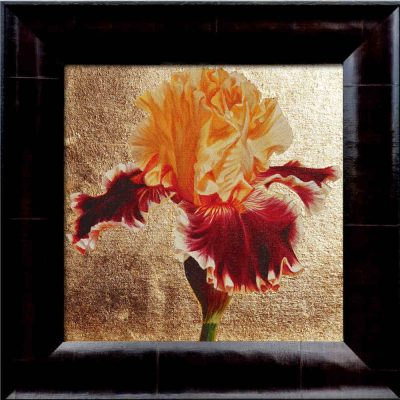 Gold and toffee bi-coloured bearded iris in bright sunshine on 23ct red gold leaf background. Original acrylic painting by UK Floral Artist Sarah Caswell on canvas.
